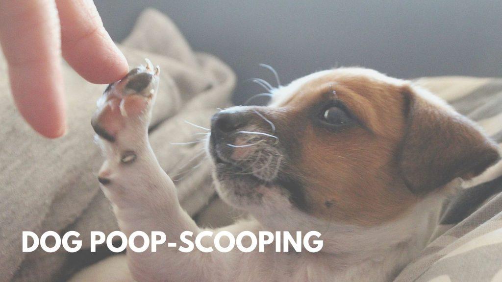 Dog poop-scooping